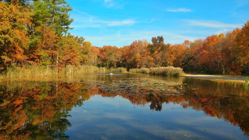 Glorious Fall day in Elmer, New Jersey. Reflection Tree Water Nature Lake Scenics No People Outdoors Landscape Reflection Lake Sky Beauty In Nature Day
