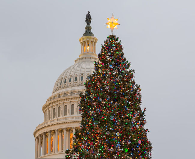 Christmas tree at US Capitol building in the capital city of Washington DC in the USA Capitol Christmas DC Government Holiday Skyline US Capitol US Capitol Building USA Washington Washington DC Washington, D. C. Capital christmas tree Congress Dome Season