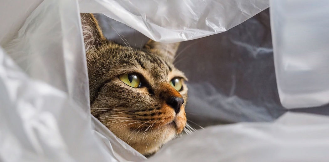 Lovely cat funny playing in plastic bag My Best Photo Animal Head  Whisker Sheet Relaxation Furniture Animal Body Part Close-up Indoors  No People Textile Bed Vertebrate Domestic Cat Feline Cat Animal Mammal Domestic Pets Domestic Animals One Animal Animal Themes Animal Eye Animal Head  Indoors