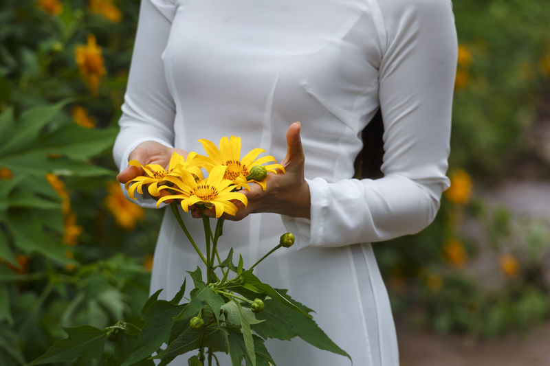 Bao Loc, Lam Dong Province, Vietnam - November 5, 2016 : young girl holding some of freshly picked wild sunflowers from the bushes of wild sunflower bloom in yellow, colorful scene Amazing Asian  Blossoms  Charm Charming Colorfull Editorial  Farm Flower Flowers Flowers In Hands Human Hand Midsection Nature One Person Outdoors People Rural Sunflower Tourist Travel Vietnamese Village Wild Yellow Flower