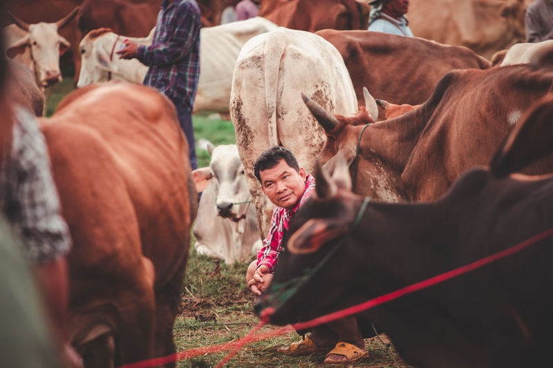 Ainimal In Landscape Cowboy Outdoors Real People Livestock Herd Man Pets Domestic Animal Themes Selective Focus Cow