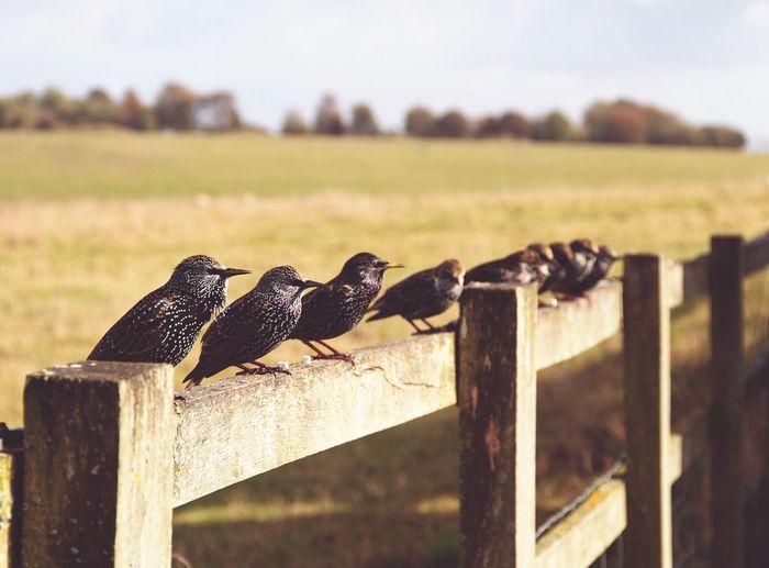 Birds Birds Bird Fence United Kingdom