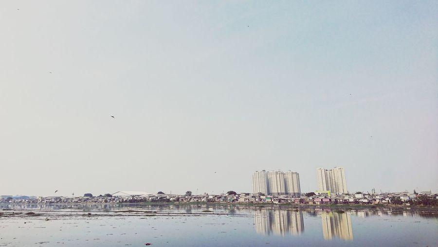 Birds flying over beach against clear sky