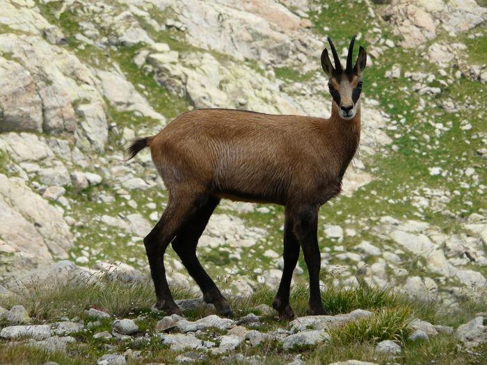 Deer standing on rock