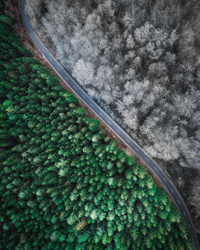 High angle view of trees on land