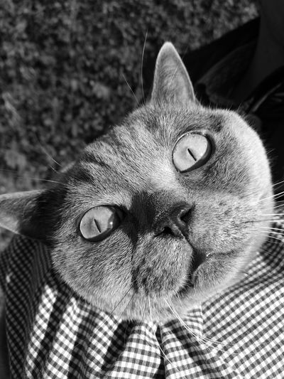 Cat♡ Cat Catsagram Cat Watching Cat Eyes Cat Photography Catlover Cat Face Cat Potrait Catnose Cat Outdoors Animal Hair Animal Eye Animal Photography