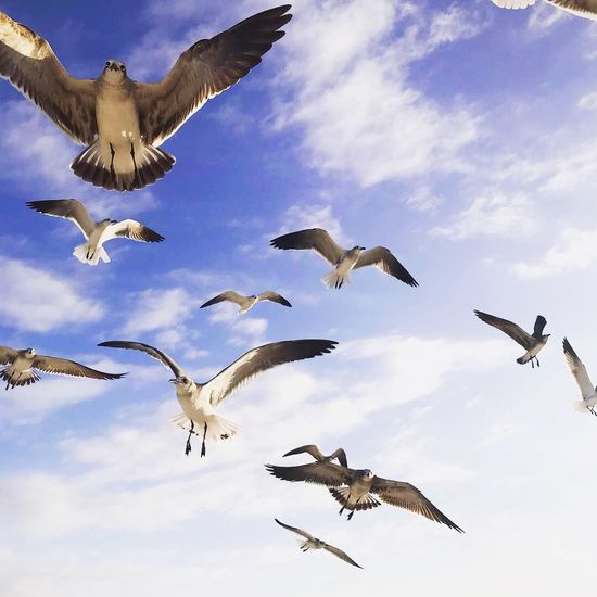 Flying Animal Themes Sky Animals In The Wild Group Of Animals Animal Wildlife Cloud - Sky Nature Motion No People Bird