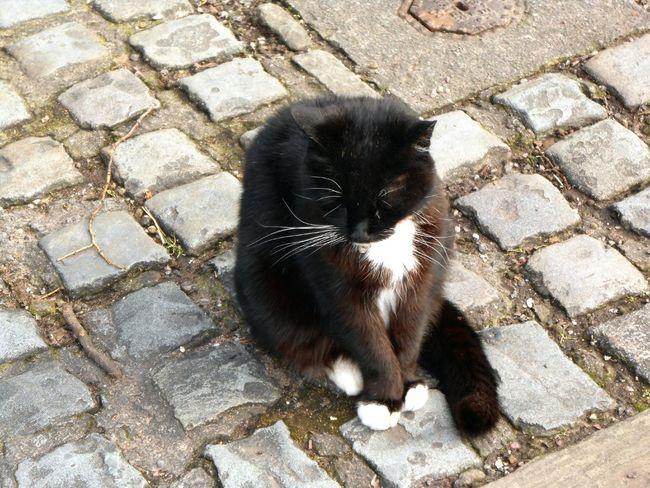 Chester Cat