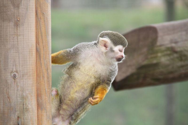Animal Wildlife Monkey Zoo Zoophotography Zoo Animals
