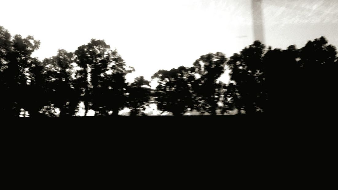 Silhouette Trees Black And White River Road BlurredLines Blurry