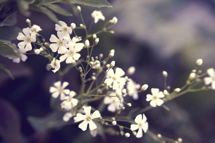 Plant Freshness