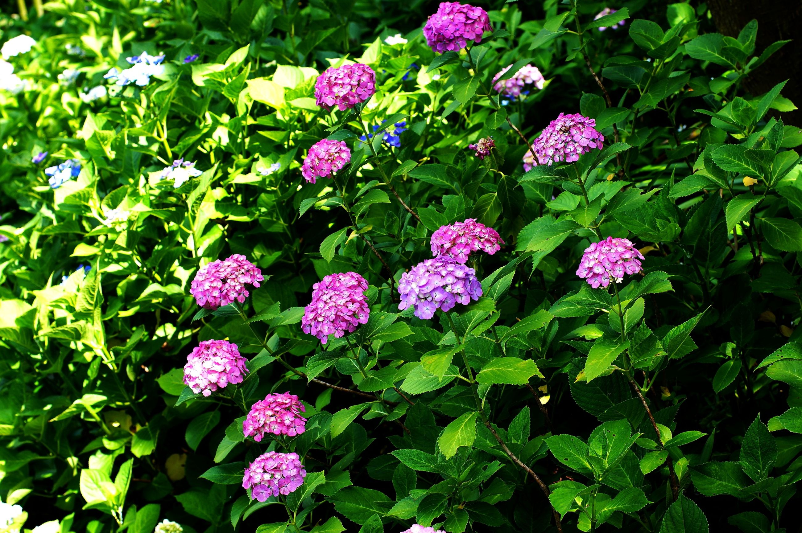 flower, freshness, growth, fragility, beauty in nature, leaf, green color, plant, petal, purple, nature, high angle view, blooming, flower head, field, in bloom, pink color, outdoors, park - man made space, botany