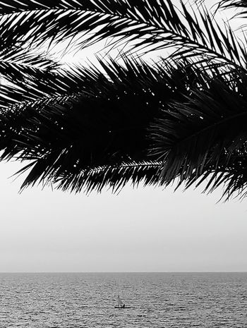 Sea Beach Horizon Over Water Sky Outdoors Water No People Nature Vacations Travel Destinations Beauty In Nature Palm Tree Clear Sky Black And White Friday