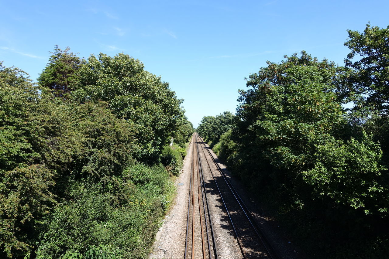 tree, plant, transportation, rail transportation, sky, direction, railroad track, the way forward, track, growth, nature, green color, diminishing perspective, no people, day, sunlight, beauty in nature, vanishing point, outdoors, non-urban scene, long