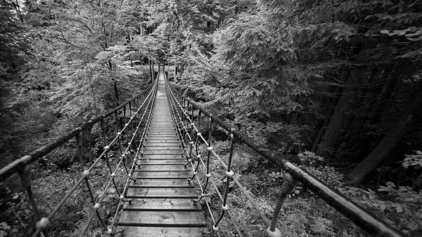 Rope bridge in the forest monochrome Excursion Go Rothaarsteig Sauerland Schmallenberg Wood Wooden Bridge Adventure Bridge Cable Stayed Bridge Connection Footbridge Forest Forest Monochrome Nature No People Outdoors Railing Railroad Track Rope Bridge Scenics The Way Forward Tree Way Summer Exploratorium
