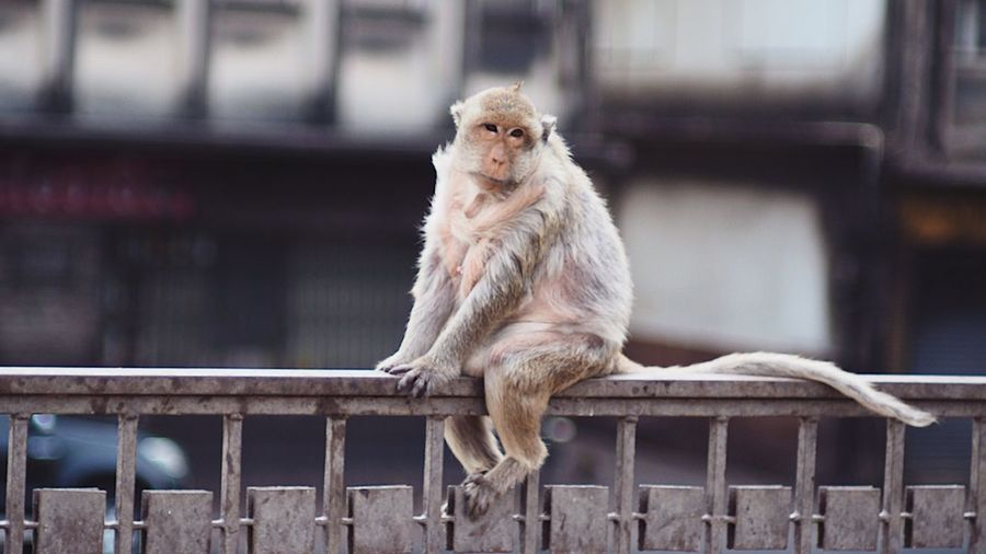 Monkey sitting on railing