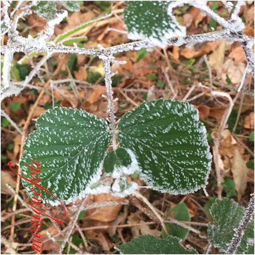 Frozen Butterfly 💕💗 Monique52 Focus On Foreground Beauty In Nature Dezember 2016 Gefällt Mir Frostig Südschwarzwald