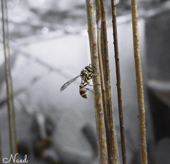 One Animal Wasp Wasp Macro Waspcam First Eyeem Photo Pet Portraits The Week On EyeEm EyeEmNewHere