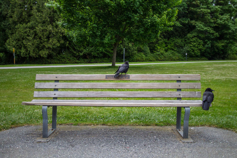 Crows perching on park bench