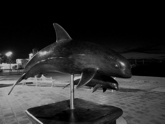 Monumento a la vaquita marina en La Paz, B.C.S. One Animal Animal Themes No People Close-up Outdoors Day First Eyeem Photo