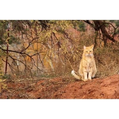 Tinythaliaphotography Fstopandstare Photography Cat catsofinstagram outdoors nature tabbycat arizons igdaily sedona pets cathedralrock