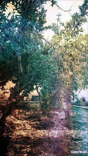 Trees, Garden, Plants, Nature, Tunisia, art