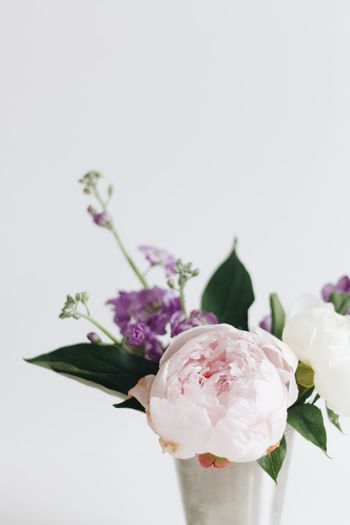 Blooming peonies against a white background. Minimalist Peonies Pink Studio White Space Bouquet Close-up Floral Flower Flower Head Flowers Flowers In Vase Minimalism People Pink And Green Pink And White Simple Simple Photography Simplicity White Background