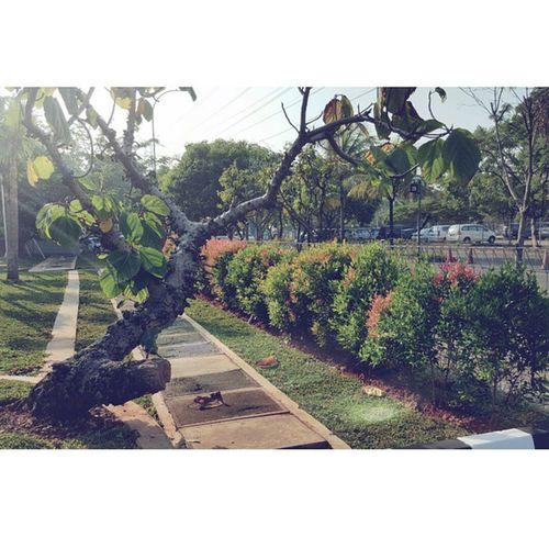تصويري  عدستي اندونيسيا جاكرتا تصوير  جالكسي_اس6 جالكسي_s6 جالكسي_اس6_ايدج جالكسي_s6_edge By_me INDONESIA Jakarta By  Galaxy S6 Galaxy_s6_edge