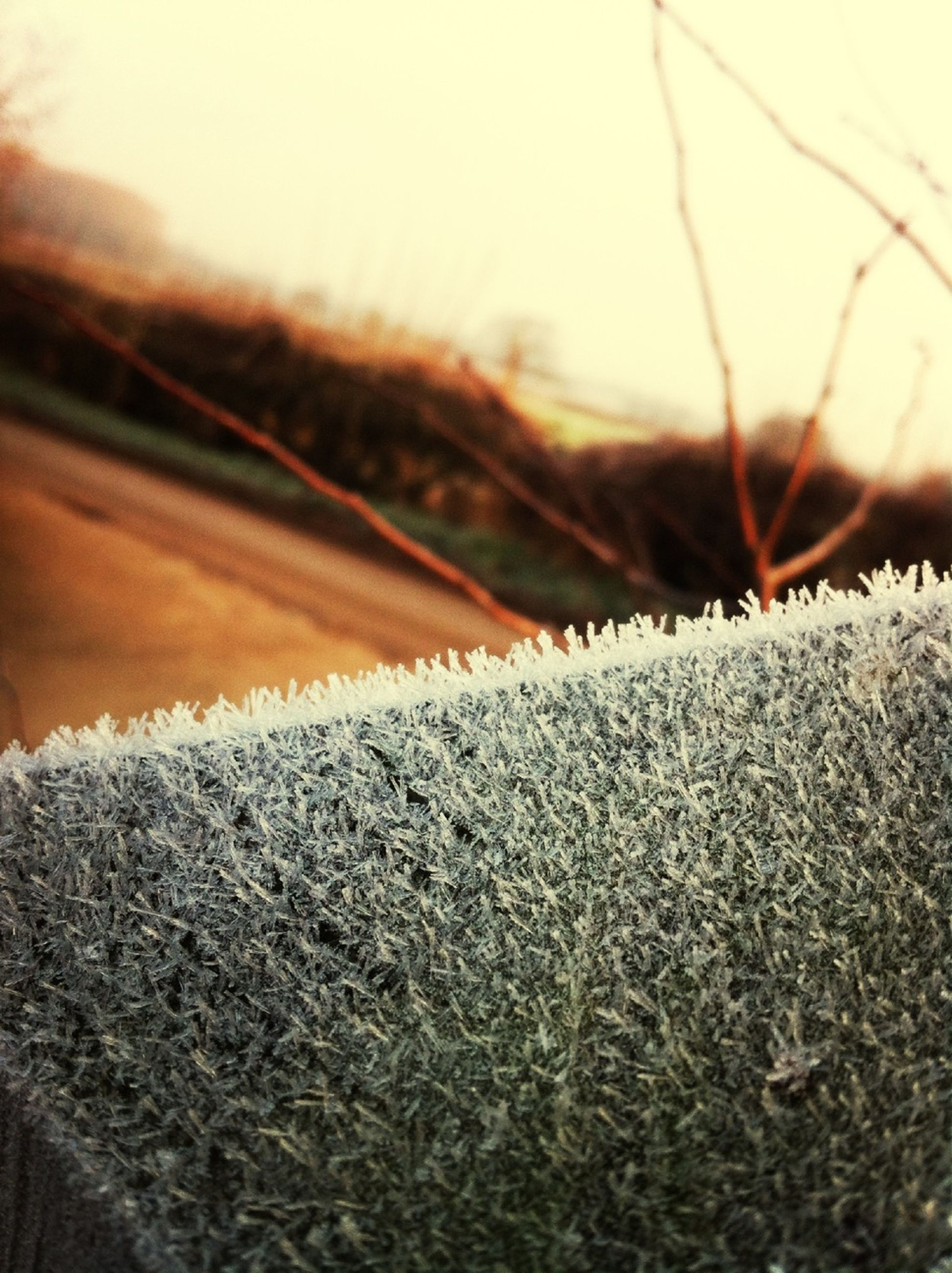 winter, snow, cold temperature, focus on foreground, season, frozen, close-up, nature, weather, tranquility, selective focus, surface level, landscape, tranquil scene, field, dry, covering, outdoors, beauty in nature, no people
