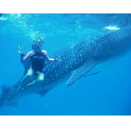 Tapang tapangan ang peg ko dito hahahaha Nolifevest Cebu Sept2014 Oslob butanding whaleshark gentleones harmless lovetotravel dreamcometrue 800th 😄😃😀😊☺😉👍👙💖💕🐬🐳🐋🌊☀⛅🌞