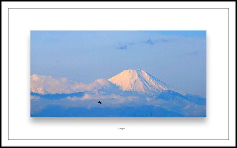 Small And Swift Cobalt Blue By Motorola Mtfuji Mt. Fuji Fujimount Mountain View Bird Big Bird, Small Bird Hello World EyeEm Nature Lover