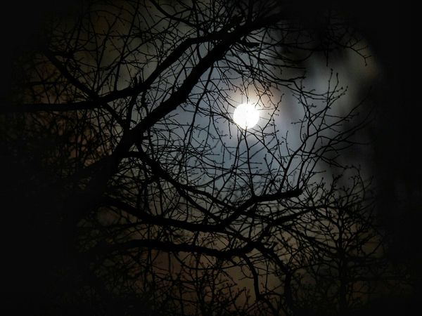 Moon Moonlight Moody Moon Light Trees TreePorn Moon Shots Silhouette