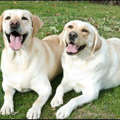 Dog Cute Adorable Love