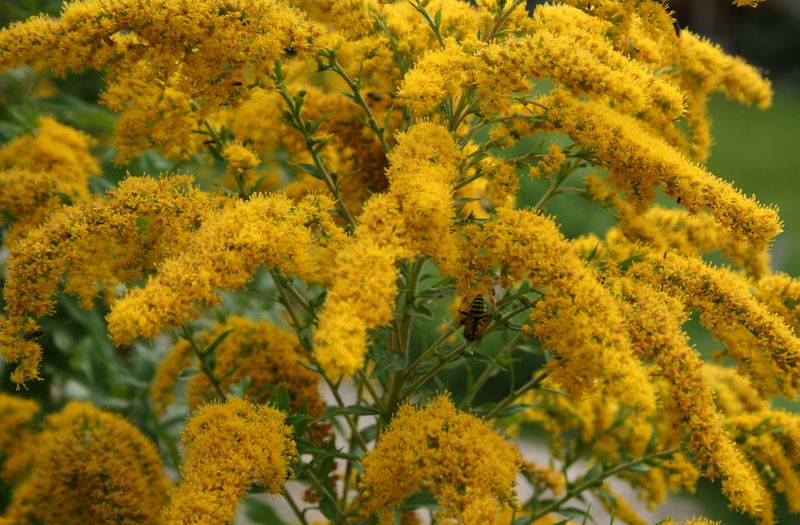 Botany Close-up Focus On Foreground Nature No People One Insect Südtirol Yellow Flowers
