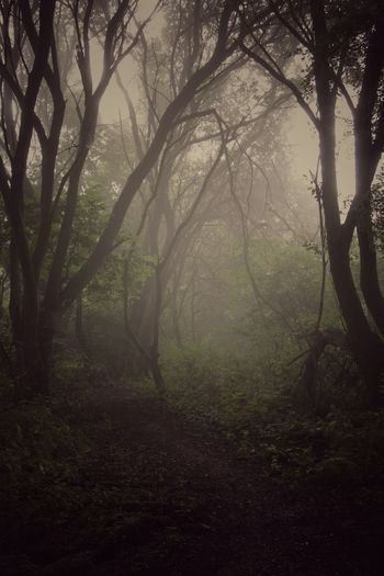 Fog Forest Tree Nature WoodLand Beauty In Nature Wilderness Area Trough The Trees Canon 70d Forest Photography ForTheLoveOfPhotography Canonphotography Eos70d Trough The Lens EyeEmNewHere Canon_photos Canon EOS 70D The Week On EyeEm EyeEm Selects Loving Nature Hazy Days Wildlife Breathing Space No People Beauty In Nature
