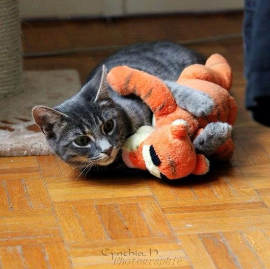 Marley et sont doudou. Cat I Love My Cat