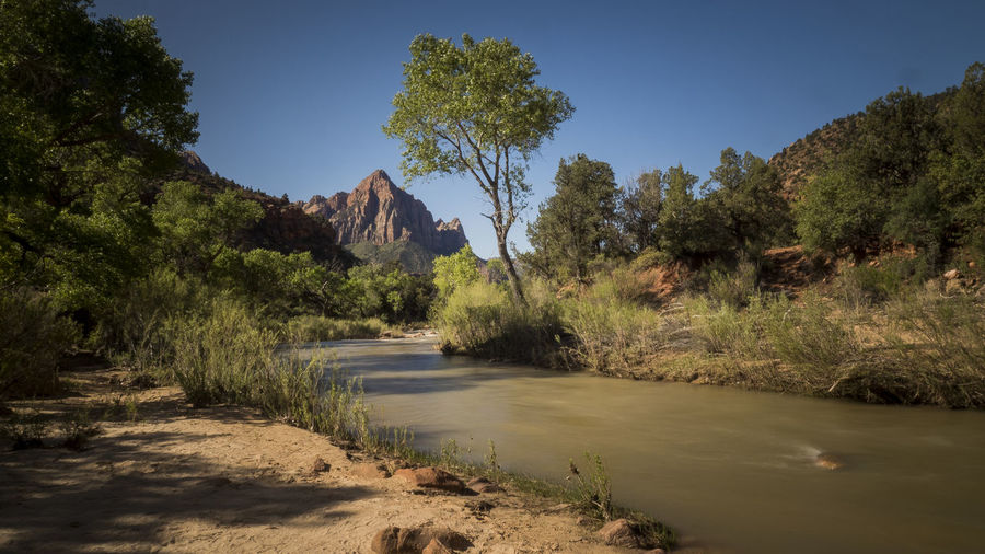 the virgin river Tree Plant Nature Water Tranquility Sky Tranquil Scene Beauty In Nature Scenics - Nature No People Day Growth Non-urban Scene Land Environment Forest Sunlight River Landscape Outdoors Flowing