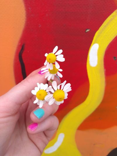 Chamomile White Flowers Flowers In Bloom Flowers In Hand Yellow Color Red Color Multi Colored Color Composition Red One Person Human Hand Flower Fragility One Young Woman Only Close-up Beauty Nail Polish Fresh Colors Optimistic Warm Colors Contast Neon Life