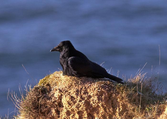 Crow's nest One