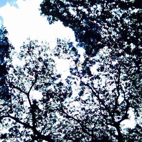 🌿. 어제도. 오늘도. 내일도. 공드리 Ssn Nature Sky Vscocam Life
