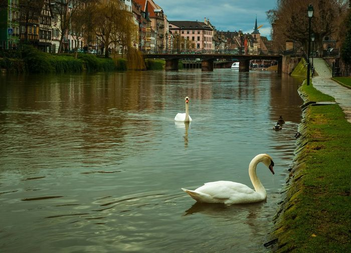Paired for life. Strasbourg France Scenic Adventure Walkthroughthecity Tread River City Walkalongtheriver Adapted To The City Adapted To The City Adapted To The City
