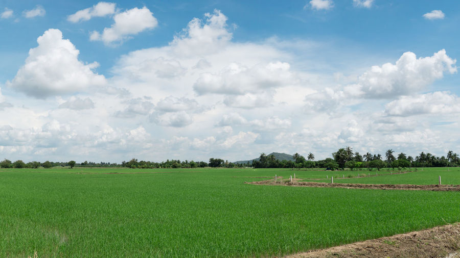 Agriculture Beauty In Nature Cloud - Sky Field Grass Green Color Landscape Rural Scene Sky Tranquil Scene Tranquility