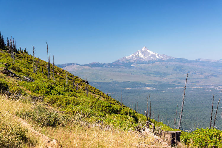 Beautiful view of Mt. Jefferson near Bend, Oregon Oregon Bend Mt Jefferson Mount Jefferson Jefferson Mountain Cascades Cascade Mountains Volcano Landscape Northwest Pacific Northwest  Summer Forest Pine Tree Pine Trees Mountain Peak Mountain Range USA No People Idyllic Nature Beauty In Nature Sky Clear Sky