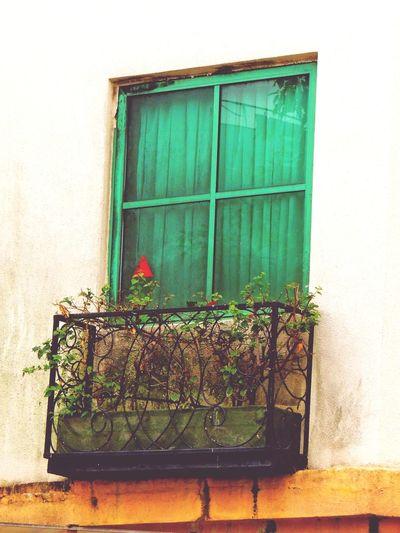 In Love With Windows Windows Windows And Flowers Windows Around The World Travel Diaries Around The World