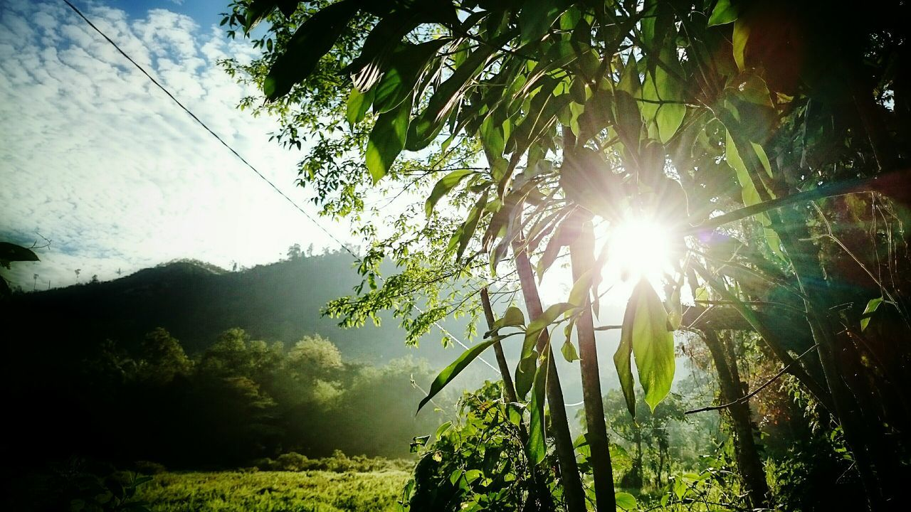 sunbeam, lens flare, sun, growth, nature, sunlight, day, tree, outdoors, beauty in nature, tranquility, no people, plant, tranquil scene, low angle view, scenics, sky, grass