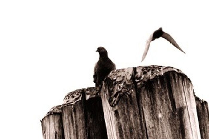 Animal Wildlife Bird Animal Themes Animals In The Wild One Animal Wood - Material Perching No People Nature Low Angle View Wooden Post Close-up Tree Stump Tree Trunk Beak Day