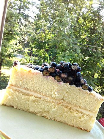 Freshness Sweet Food Food And Drink Sweet Animal Nature Outdoors Sunlight Green Color Baked Food Cake Still Life No People Growth Plant Tree Dessert Close-up Day Blueberry Saint Petersburg Summertime Summer Dessert