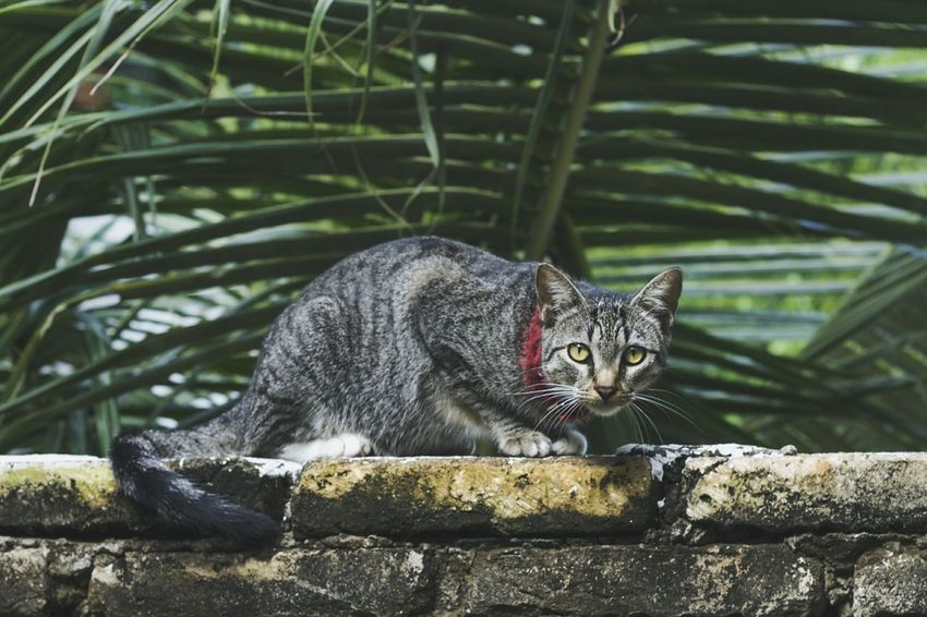 Cat Palm Tree Cat Eyes Nature Catoftheday Animal