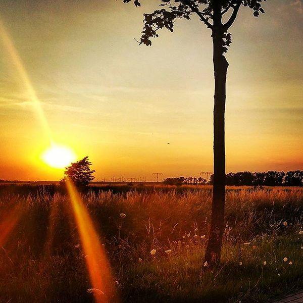 Der Sonne entgegen. Sonne Sunset Sun Summerevening Instagood