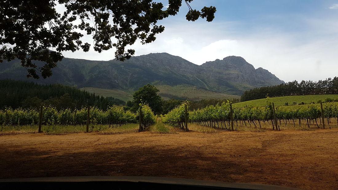 Delheim Wine Farm Stellenbosch Wine Makers God's Glory On Display  Western Cape Beauty In Nature Breathtaking Panorama Landscape Winery